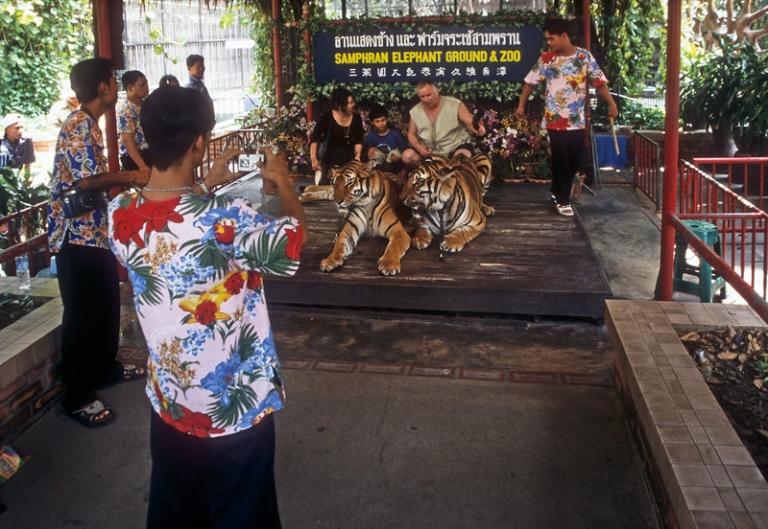 Thailand Bangkok Tierquälerei Taxi Tuc Tuc Tiger