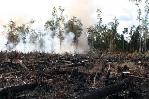 Indonesien Brandrodung Palmöl Plantagen plantation Borneo Orang Utan BOS
