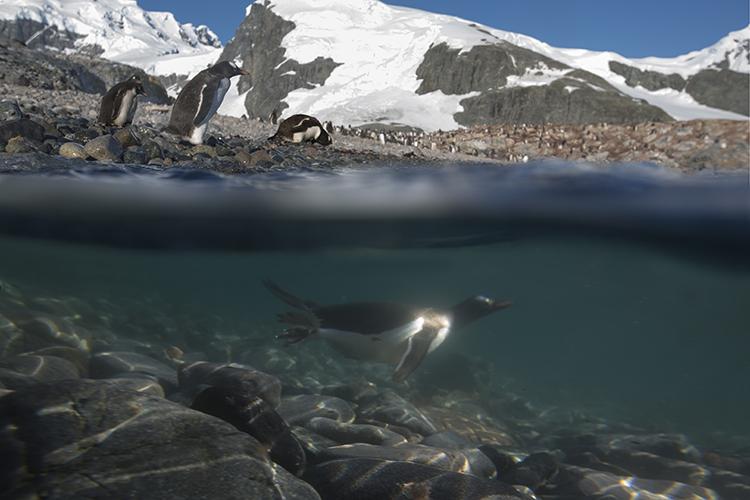 Cuverville -  Antarctica Peninsula