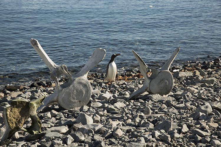 Cuverville Island - Antarctica Peninsula
