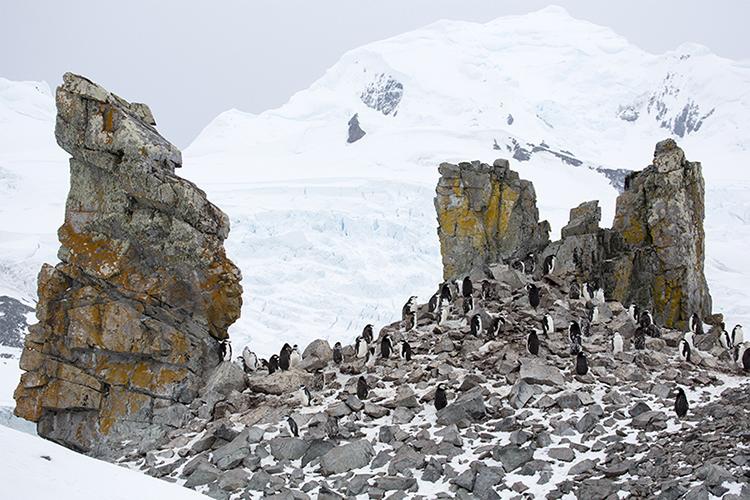 Halfmoon Island - Antarctica Peninsula