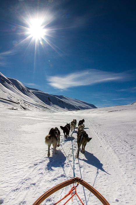 Schlittenhunde Sonne Arktis